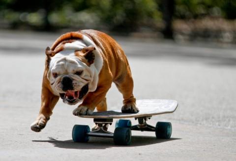 120407-skateboard-hund-2